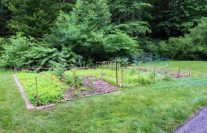 RP community garden